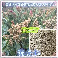 宁夏藜麦粉供应 藜麦熟粉 藜麦生粉 国产白藜麦粉