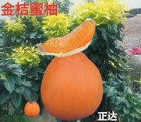 金桔蜜柚苗木要哪里买才正宗,平和县正达蜜柚种苗有限公司