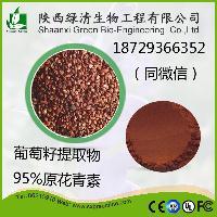 葡萄籽提取物  95%原花青素 美容养颜
