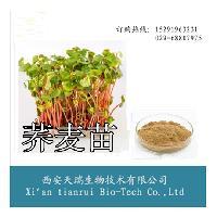 荞麦苗粉 专业植提厂家