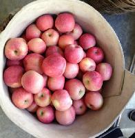 山东红富士苹果价格 山东苹果批发价格