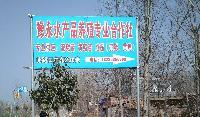 台湾泥鳅苗 泥鳅养殖基地在河南永城豫永水产品养殖