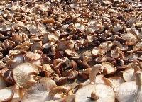 香菇提取物