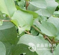 厂家供应白藜芦醇  98%
