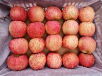 红富士苹果价格行情