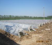 地瓜红薯苗种植基地