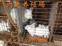 养殖肉兔种兔