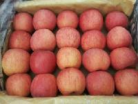 陕西纸袋红富士苹果又香又甜/陕西红富士苹果产地