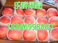 红将军苹果价格最新红将军苹果批发价格