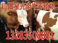 长治供应肉牛长治销售肉牛