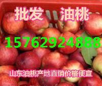山东油桃产地油桃批发价格