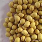 大豆分离蛋白