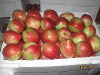 山东油桃价格最新油桃批发价格详细报道