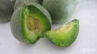 绿先锋甜瓜