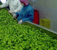 2017新型*豆芽漂烫冷却* 蔬菜蒸煮卤制线,五一优惠限时购