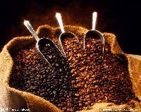 咖啡豆 咖啡胶囊进口报关代理 进口食品清关