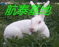 目前升值快的兔子利润效益品种