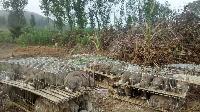 山东比利时肉兔养殖场 肉兔种兔