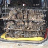 农村有什么好的事业好做思麻兔子养殖项目