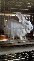 养殖什么兔子比较赚钱啊