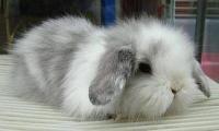 专业提供种兔 包成活 大型兔子养殖基地_
