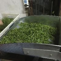 石台香芽茶叶