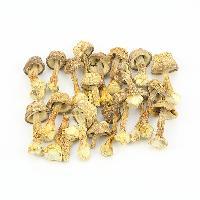 厂家批发 姬松茸 原色 无硫熏 巴西菇