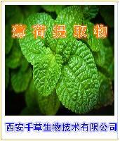 薄荷浓缩粉纯天然植物提取全水溶厂家生产薄荷粉
