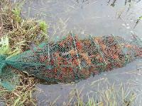 厂家薄利直销大量供应小龙虾