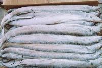 冷冻带鱼 冷冻水产品批发厂家