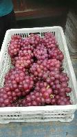 临朐巨峰葡萄 2.5元/斤