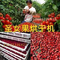 小西红柿烘干设备工艺价格