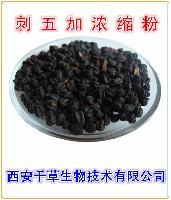 刺五加提取物 厂家生产 纯天然水溶刺五加粉