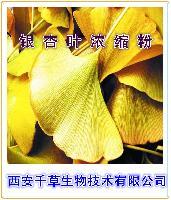 银杏叶提取物 厂家生产纯天然提取物银杏叶浓缩粉