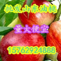 油桃价格大连油桃价格今年油桃价格行情