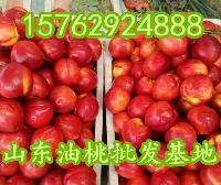 山东油桃供应基地万亩油桃低价批发