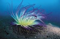 海藻浓缩粉 【西安千草生物】 现货特销