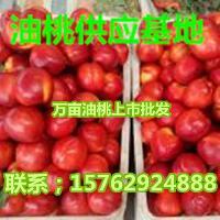 油桃批发价格