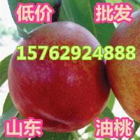 出售山东大棚油桃