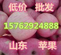 山东红富士苹果产地直销价