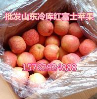 山东苹果产地批冷库红富士苹果