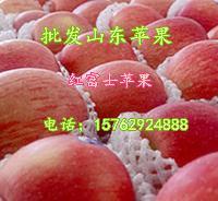 山东苹果供应基地批发大量优质苹果红富士苹