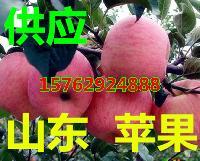 山东水果批发基地果园直销红富士苹果