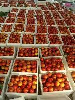山东大棚油桃大量上市山东油桃价格