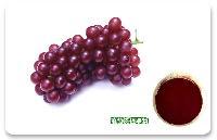 葡萄皮色素