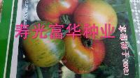 进口草莓西红柿种子-嘎啦