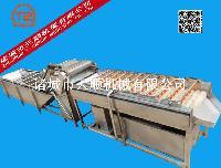 TSQX-5800新款太子参连续式清洗机(视频)