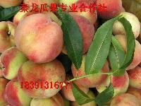 优质毛桃批发价格早熟毛桃价格