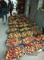 陕西油桃多少钱极早油桃价格,油桃上市价格,油桃装货价格