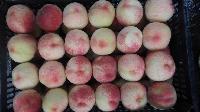 陕西早熟毛桃产地直销,极早成熟的毛桃价格